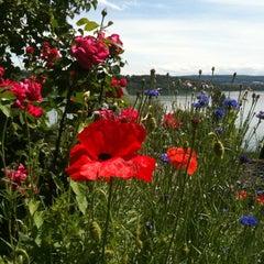 Photo taken at Schafis by Tamara M. on 6/22/2012