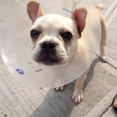 Photo taken at Humane Society of NY by Stephanie O. on 9/2/2012