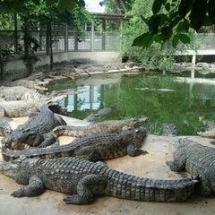 Photo taken at The Million Years Stone Park & Pattaya Crocodile Farm (อุทยานหินล้านปีและฟาร์มจระเข้พัทยา) by Manggumbee M. on 12/5/2011