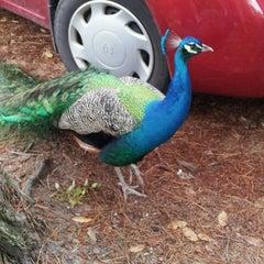 Photo taken at Magnolia Plantation & Gardens by Sue B. on 4/19/2012