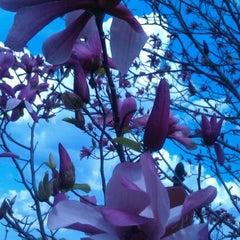 Photo taken at Lewis Ginter Botanical Garden by Steve S. on 3/15/2012