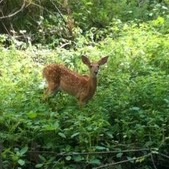 Photo taken at Portage Creek Bicentennial Park by Jamie H. on 6/22/2012