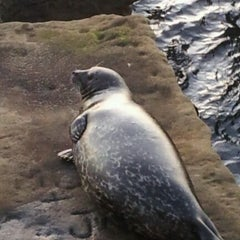 Photo taken at La Jolla Community by Leeann H. on 1/3/2012