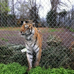 Photo taken at Carolina Tiger Rescue by Eileen A. on 3/3/2012