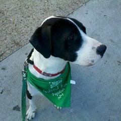 Photo taken at The Dog Shop by Jennifer M. on 12/11/2011