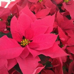 Photo taken at Lowe's Home Improvement by Brooke A. on 12/13/2011
