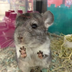 Photo taken at Petco by Lisa J. on 3/1/2012