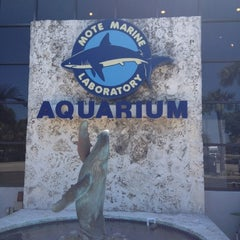 Photo taken at Mote Marine Laboratory & Aquarium by Jeff A. on 5/22/2012