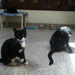 Photo taken at Monadnock Humane Society Shelter by Mary on 7/3/2012