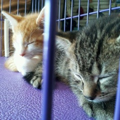 Photo taken at Holistic Pet Shop by Ashley S. on 5/12/2012