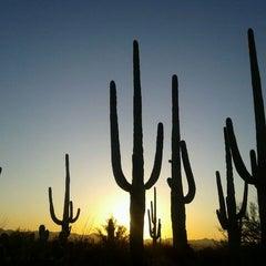 Photo taken at Saguaro National Park by Smato on 3/13/2012