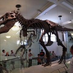 Photo taken at David H. Koch Dinosaur Wing by Davide M. on 5/29/2012