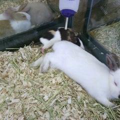 Photo taken at Pet Supermarket by Becky N Jason V. on 7/15/2012