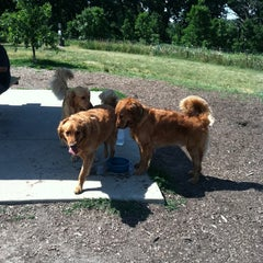 Photo taken at Du Page Forest Preserve Dog Park by Angie H. on 7/11/2012
