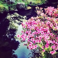 Photo taken at Japanese Tea Garden by anna banana . on 6/13/2012