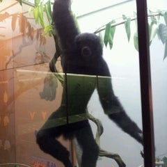 Photo taken at Hall Of Primates by Roberto T. on 5/13/2012