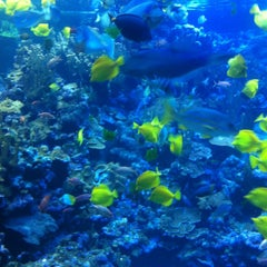 Photo taken at Maui Ocean Center, The Hawaiian Aquarium by Steve L. on 5/10/2012