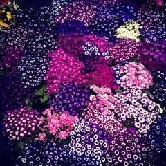 Foto tomada en Mercado de Plantas y Flores  Madreselva por Mau A. el 4/1/2012