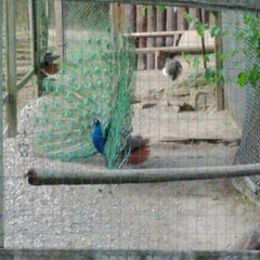Photo taken at High Park Zoo by Cam T. on 6/27/2012