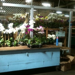 Photo taken at SF Flower Mart by Tiki H. on 6/16/2012