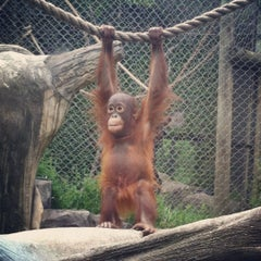 Photo taken at Erie Zoo by Danielle W. on 5/22/2012