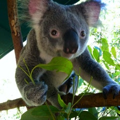Photo taken at Australia Zoo by Pearlypearl on 4/7/2012