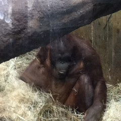 Photo taken at Great Ape House at the National Zoo by Michael D. on 4/2/2012