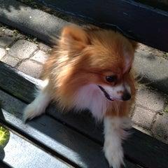 Photo taken at Peter Detmold Park Dog Run by Robin M. on 5/11/2012