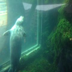 Photo taken at New England Aquarium by Kirstin M. on 7/17/2012