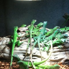 Photo taken at LLL Reptile by mikr on 4/21/2012