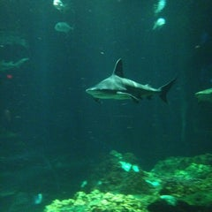 Photo taken at Sharks Underwater Grill by Raul S. on 6/29/2012
