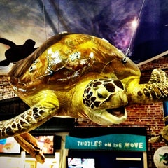 Photo taken at Georgia Sea Turtle Center by Brian W. on 6/24/2012