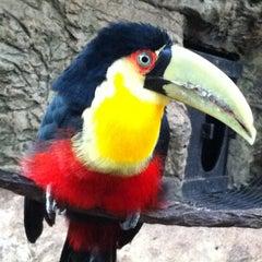 Photo taken at Dallas World Aquarium by  ℋumorous on 2/29/2012