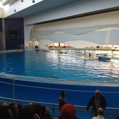 Photo taken at Dolphin Show by Steph F. on 2/27/2012