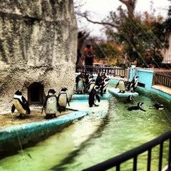 Photo taken at 上野動物園 (Ueno Zoo) by Junichiro F. on 3/4/2012