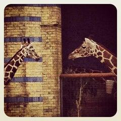 Photo taken at Zoologischer Garten Berlin by Christian B. on 8/10/2012