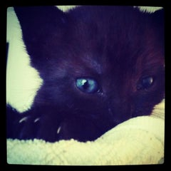 Photo taken at Houston Humane Society by Catherine on 8/24/2012