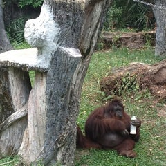 Photo taken at Zoo Taiping & Night Safari by May T. on 8/19/2012