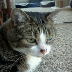Photo taken at Three cat time by Megan E. on 5/12/2012