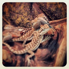 Photo taken at Moby Dick Pet Store by Ashley Z. on 7/10/2012