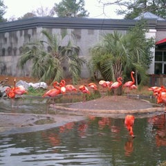 Photo taken at Penguin House at Riverbanks Zoo by Jennifer W. on 2/21/2012