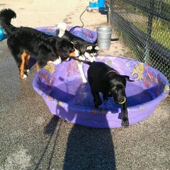 Photo taken at Churchill Field Dog Park by Natalie G. on 5/25/2012