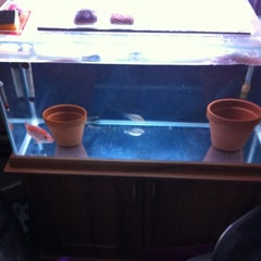 Photo taken at Fish Tank Maintenance Time by Mike ⚽⚽ on 5/16/2012
