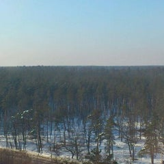 Photo taken at Ліс by Вячеслав Б. on 2/13/2012