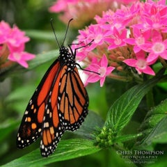 Photo taken at Krohn Conservatory by Chris T. on 4/24/2012