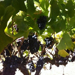 Photo taken at Sunce Winery by Lora T. on 8/27/2012