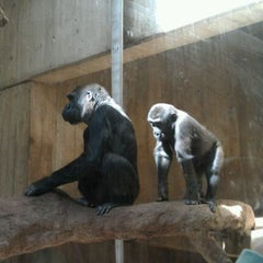 Photo taken at Great Ape House at the National Zoo by Shameka C. on 4/5/2012