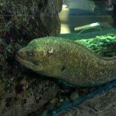 Photo taken at Heal the Bay's Santa Monica Pier Aquarium by David S. on 4/27/2012