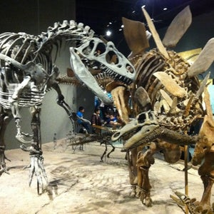 The 15 Best Places for Exhibits in Denver