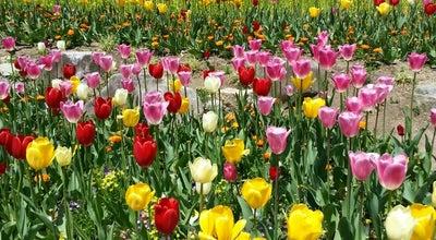 Photo of Garden 神戸布引ハーブ園 (Nunobiki Herb Garden Park) at 中央区北野町1-4-3, 神戸市 651-0058, Japan